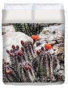 Trichocereus Cactus Flowers Duvet Cover