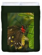 Troides Helena Butterfly  Duvet Cover