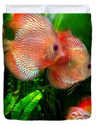 Tropical Discus Fish Group Duvet Cover