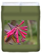 Trumpet Honeysuckle Buds Of Coral Woodbine  Duvet Cover