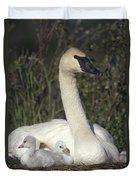 Trumpeter Swan On Nest With Chicks Duvet Cover by Michael Quinton