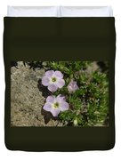 Tufted Phlox Duvet Cover