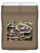 Turkey Tail Bracket Fungi -  Trametes Versicolor Duvet Cover