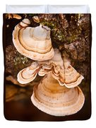 Turkey Tail Fungus 5 Duvet Cover