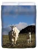 Two Mountain Goats Oreamnos Americanus Duvet Cover
