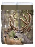 Two Mule Deer Bucks With Velvet Antlers  Duvet Cover