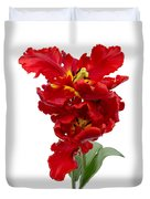 Two Red Parrot Tulips Duvet Cover
