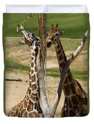 Two Reticulated Giraffes - Giraffa Camelopardalis Duvet Cover