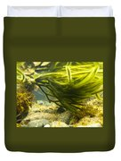 Underwater Shot Of Green Seaweed Attached To Rock Duvet Cover