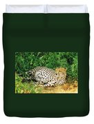 Waiting For Baby Cheetahs Duvet Cover