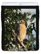 Watchful Eyes - Red Shouldered Hawk Duvet Cover