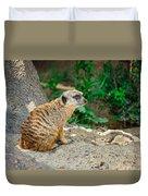Watchful Meerkat Duvet Cover