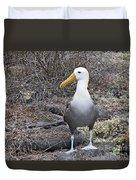 Waved Albatross Diomeda Irrorata Duvet Cover