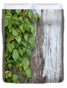 Weathered Tree Trunk With Vines Duvet Cover