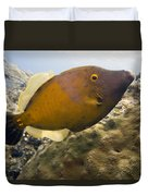White Spotted Filefish Duvet Cover