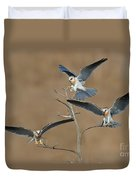 White-tailed Kite Young Duvet Cover