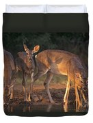 Whitetail Deer At Waterhole Texas Duvet Cover