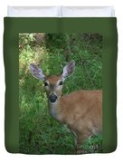 Whitetail Portrait In Valley Forge National Park Duvet Cover