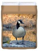 Wild Canadian Goose Duvet Cover