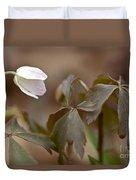 Wood Anemone Wildflower - Anemone Quinquefolia L.  Duvet Cover