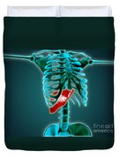 X-ray View Of Human Skeleton With Liver Duvet Cover