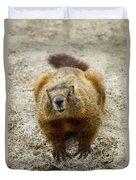 Yellow-bellied Marmot   #5300 Duvet Cover