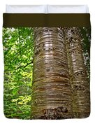 Yellow Birch Near La Chute In Forillon Np-qc Duvet Cover