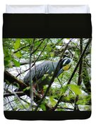 Yellow Crowned Night Heron In Display Duvet Cover