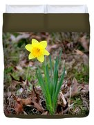Yellow Daffodil At Lee Gardens Duvet Cover