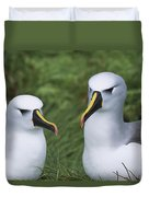 Yellow-nosed Albatross Pair Gough Island Duvet Cover