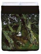 Yellow-nosed Albatrosses In Ferns Duvet Cover
