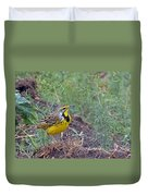 Yellow-throated Longclaw Duvet Cover