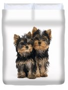 Yorkie Puppies Duvet Cover