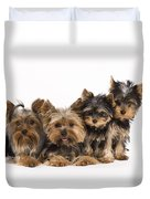 Yorkshire Terriers Duvet Cover