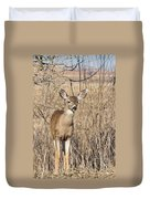 Young Black-tailed Deer Duvet Cover