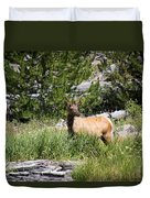 Young Bull Elk - Yellowstone National Park - Wyoming Duvet Cover