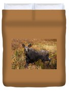 Young Bull Moose Being Aggressive Duvet Cover