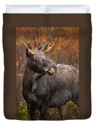 Young Bull Moose Duvet Cover
