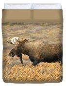 Young Bull Moose Duvet Cover