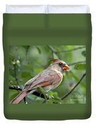 Young Cardinal Duvet Cover