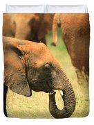 Young Elephant Duvet Cover