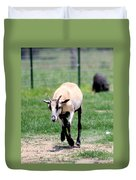 Young Goat Duvet Cover