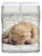 Young Labrador Puppy Duvet Cover