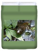 Young Mill Lake Frog II Duvet Cover