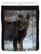 Young Moose 4 Duvet Cover
