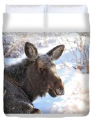 Young Moose Resting Duvet Cover