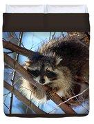Young Raccoon In Birch Tree Duvet Cover