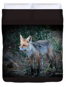 Young Red Fox Duvet Cover by Robert Bales
