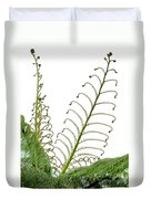 Young Spring Fronds Of Silver Tree Fern On White Duvet Cover