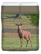 Young Stag Duvet Cover